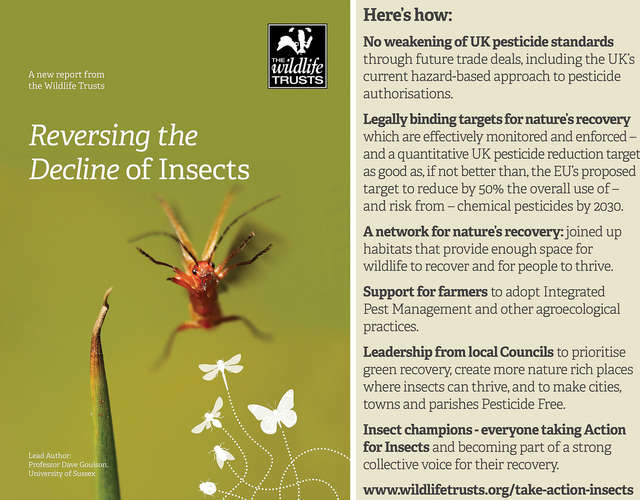 Reversing the decline of insects